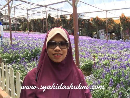 Cantik kan bunga lavender?