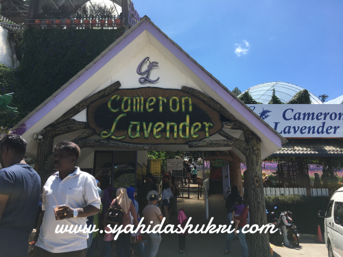 Entrance Lavender Garden, Cameron Highlands