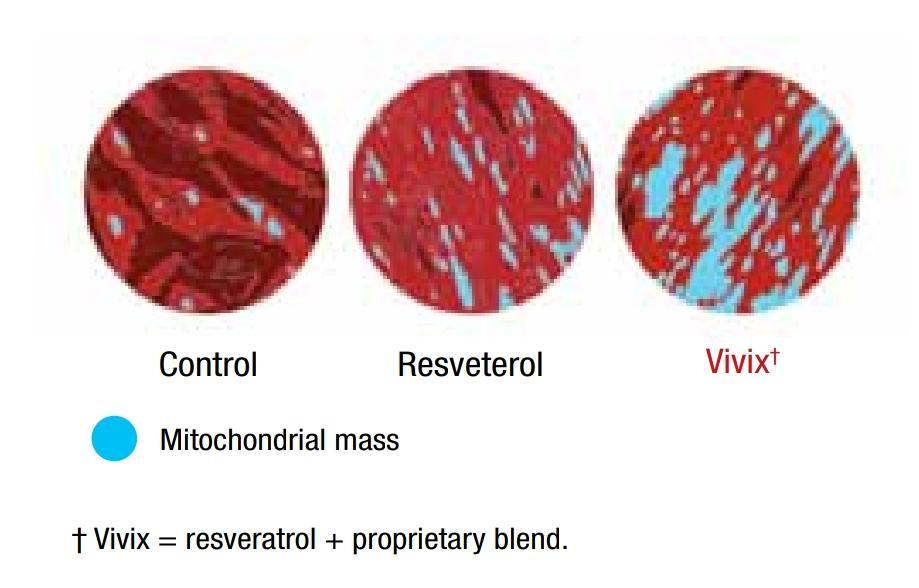 Bagaimana Polifenol dalam Vivix Membantu Kesuburan